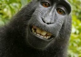 Monkey Photographer without salary
