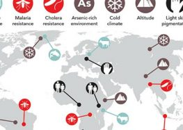 This Infographic Shows the Extraordinary Ancient Genes That Live on in Modern Populations