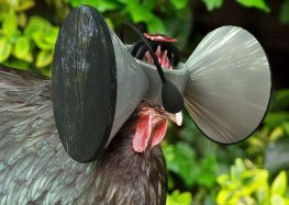 The case for raising chickens in virtual reality
