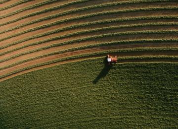 California Crops Rot as Immigration Crackdown Creates Farmworker Shortage