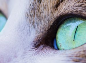 Mind-Altering Cat Parasite Linked to Schizophrenia in Largest Study Yet